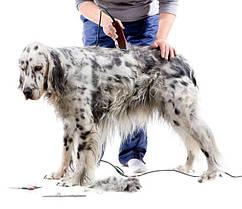Инструменты для стрижки собак