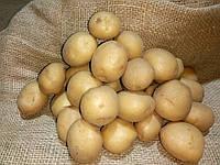 Картопля Рів'єра, сітка~2,5 кг