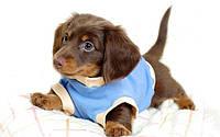 Одежда для собак, обувь, украшения для собак