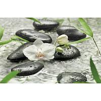 Фотообои Komar Орхидеи среди камней 8-319