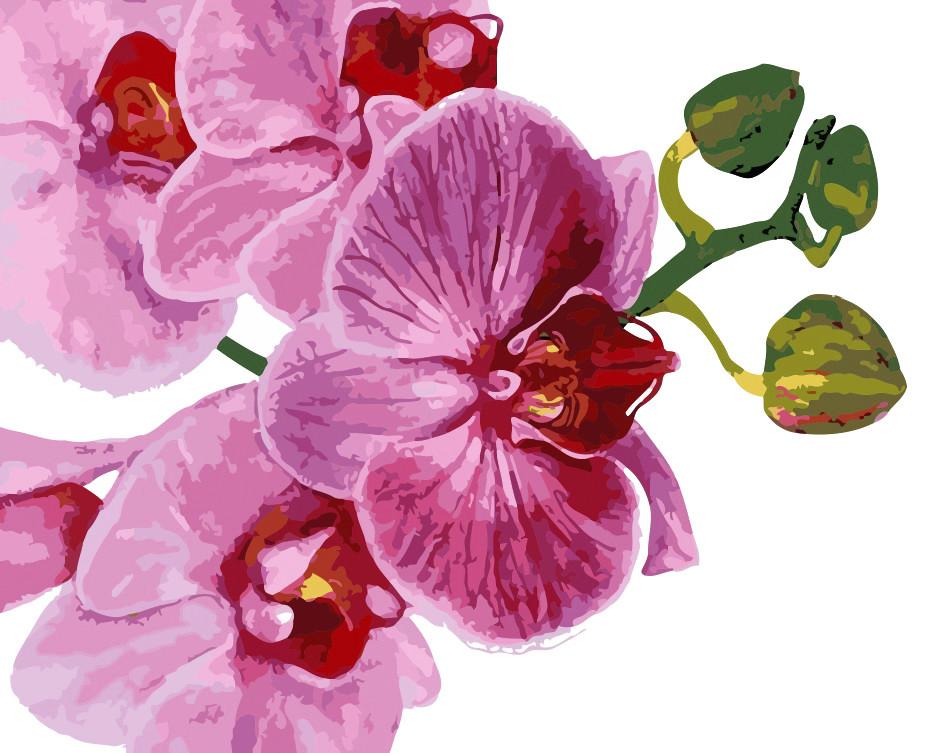 Художественный творческий набор, картина по номерам Розовая орхидея, 50x40 см, «Art Story» (AS0124)