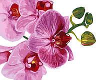 Художественный творческий набор, картина по номерам Розовая орхидея, 50x40 см, «Art Story» (AS0124), фото 1