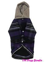 Толстовки и свитера для собак