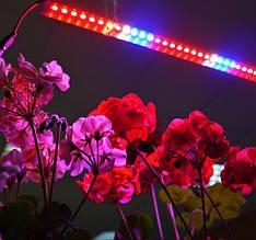 Фитоосвещение: фитолампы для растений