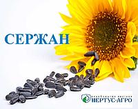 Семена подсолнечника СЕРЖАН, А-Е, Нертус Агро