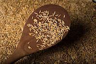 Хлебный злак: американцы вывели новый сорт пшеницы
