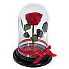 Прекрасный подарок. Долговечная роза в стеклянном колпаке, не вянет 3-5 лет
