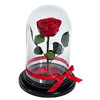 Прекрасный подарок. Долговечная роза в стеклянном колпаке, не вянет 3-5 лет, фото 1