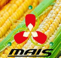 Кукуруза ДМС 3510 ФАО-350