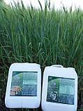 Микроудобрение для стимуляции роста и увеличения урожайности на Пшеницу Ячмень Просо Микро-Минералис Зерновые, фото 4