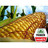 Семена кукурузы PR39B76 ФАО 280