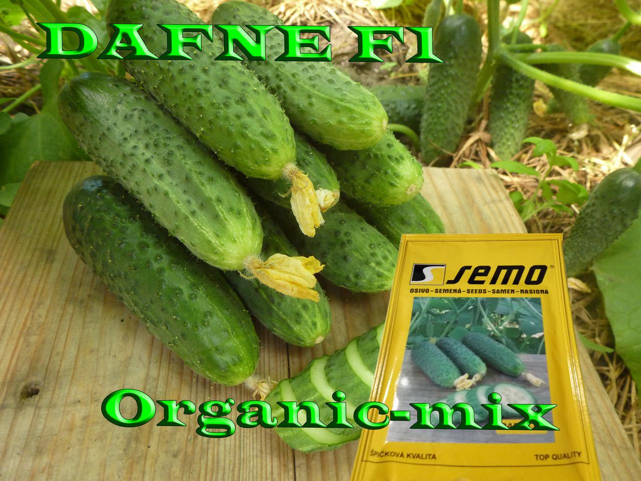 ХИТ 2019 - ДАФНЕ F1 (DAFNE F1), ТМ SEMO (Чехия), 100 семян