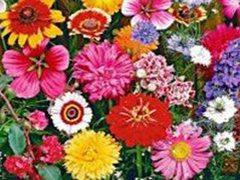 Квіти в асортименті