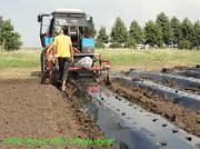 Рекомендуем когда и как мульчировать почву