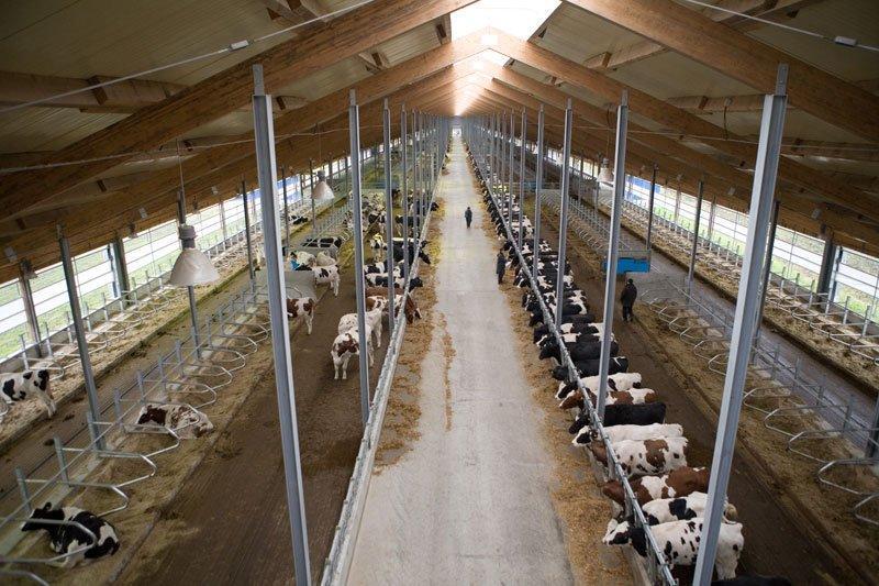 Строительство и модернизация животноводческих комплексов