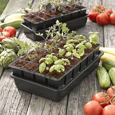 Насіння і розсада овочевих культур