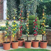 Семена, саженцы и рассада плодово-ягодных культур