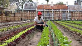 Фермы возвращаются в города: какие результаты?