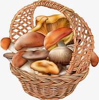 Мицелии грибов оптом