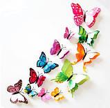 Бабочки на магните разноцветные - в наборе 12шт., пластик, так же есть 2-х сторонний скотч, фото 2