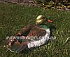 Садовая фигура Селезень кряквы и Утка декоративная, фото 6