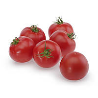 Семена томатаТапер F1 500 семян, Solare Sementi