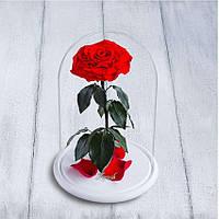 Стабилизированная роза в колбе Lerosh - Lux 33 см, раскрытая Красная на белой подставке - 138968