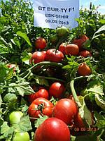 Семена Детерминантный гибрид крупноплодного томата BT BURTY F1, ранний, 500 семян BT TOHUM