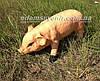 Садовая фигура Свинья большая и Хрюша, фото 5