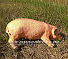Садовая фигура Свинья большая и Хрюша, фото 6