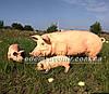 Садовая фигура Свинья большая, Кабанчик средний и Хрюша, фото 6