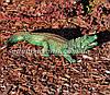 Садовая фигура Аллигатор и Аллигатор малый, фото 5