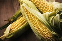 Семена Кукурузы Гламур