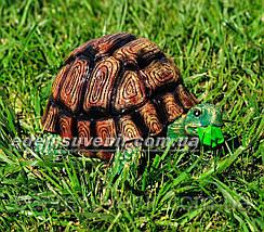 Садовая фигура Черепашонок средний, Черепаха гурман и Черепаха морская, фото 3