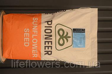 Насіння кукурудзи Піонер 9175 P9175