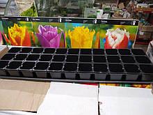 Касета для розсади на 33 комірки, розмір чарунки 52мм*52мм*65мм, Україна