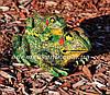 Садовая фигура Квакша и Лягушка с лягушонком, фото 4