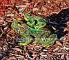 Садовая фигура Квакша и Лягушка с лягушонком, фото 5