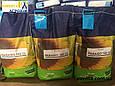 Гібрид соняшнику Параізо 102 КЛ, фото 4