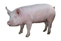 Гровер 15% БМВД для свиней от 30 до 60 кг