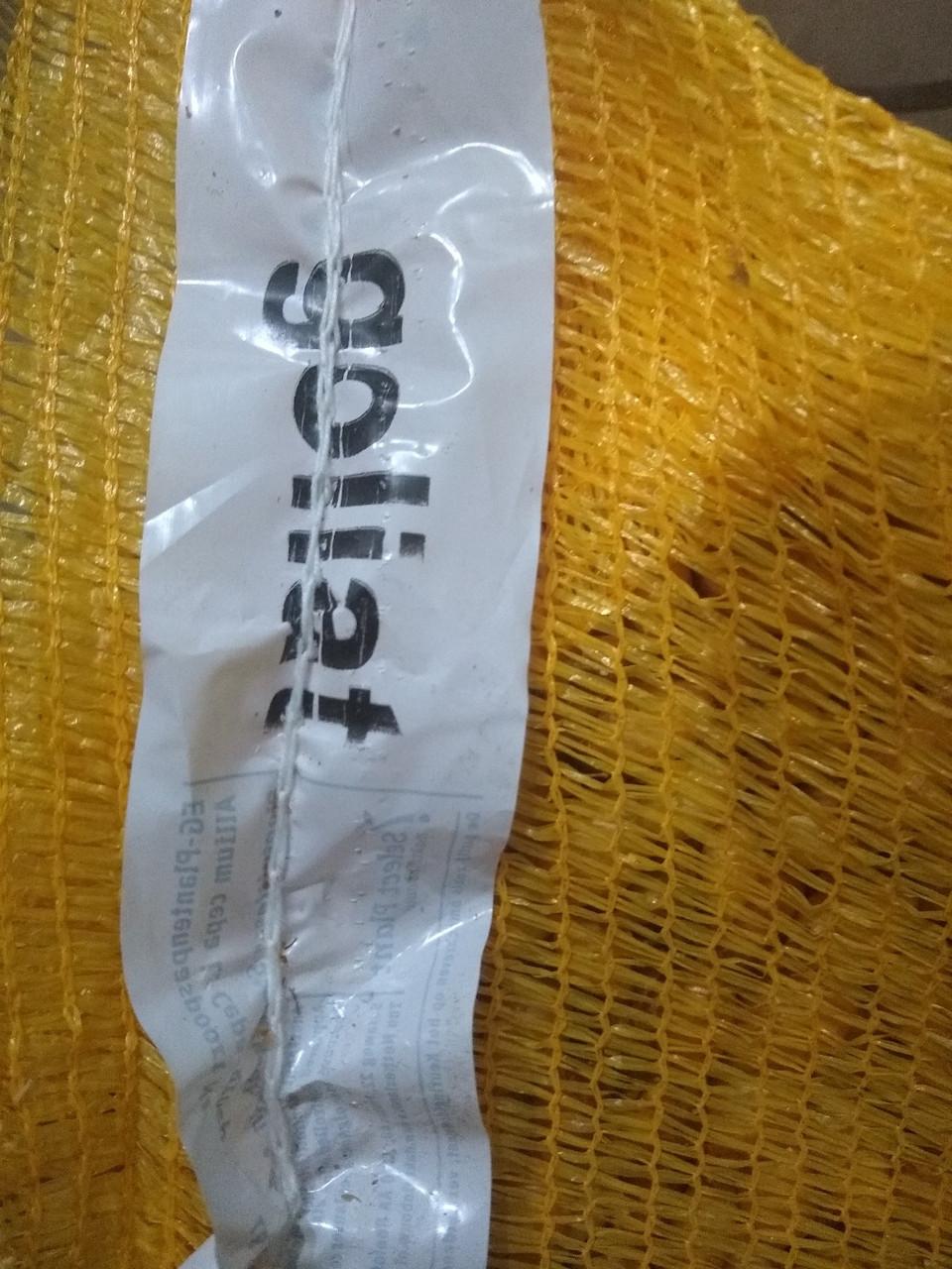 Цибулю-сіянку Голиат, середньоранній 1 кг, Голландія