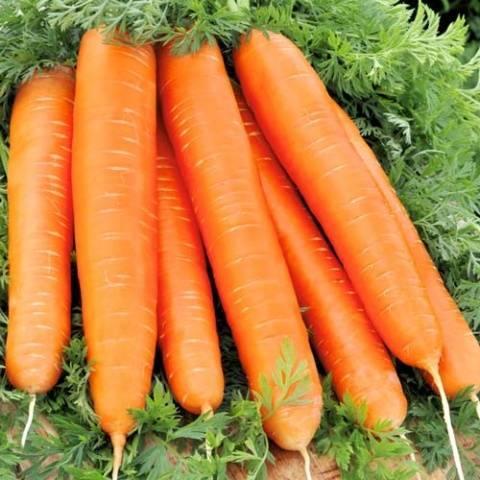 """Семена моркови Красный Великан, позднеспелый, 10 г, """"Satimex"""""""