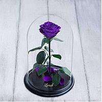 Стабилизированная роза в колбе Lerosh - Premium 33 см, Фиолетовая - 138966