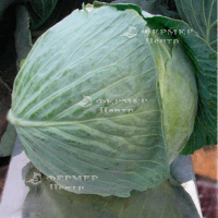 Центурион F1 - капуста белокочанная, 10 000 семян, Clause Франция