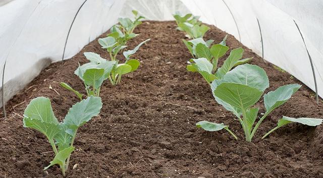 Подготовка и высадка семенного материала