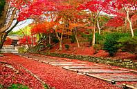 Красные клёны - украшение для сада и услада для сердца
