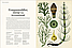 Ботанікум, фото 2