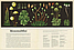 Ботанікум, фото 3