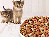 Сколько сухого корма давать кошке