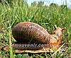 Садовая фигура Улитка большая и Улитка малая, фото 3